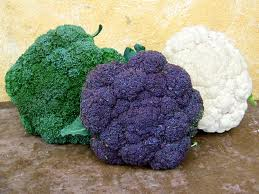 Broccoli for Longevity